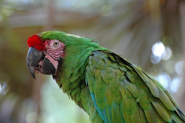 oiseaux (14)