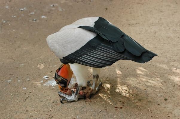 oiseaux (15)