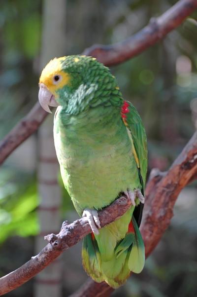 oiseaux (16)