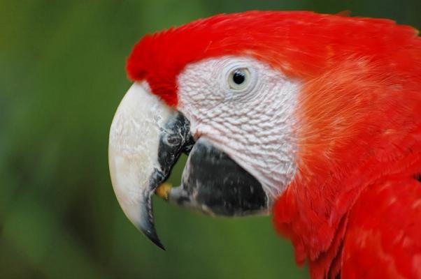 oiseaux (7)
