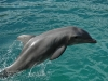 dauphin (3)