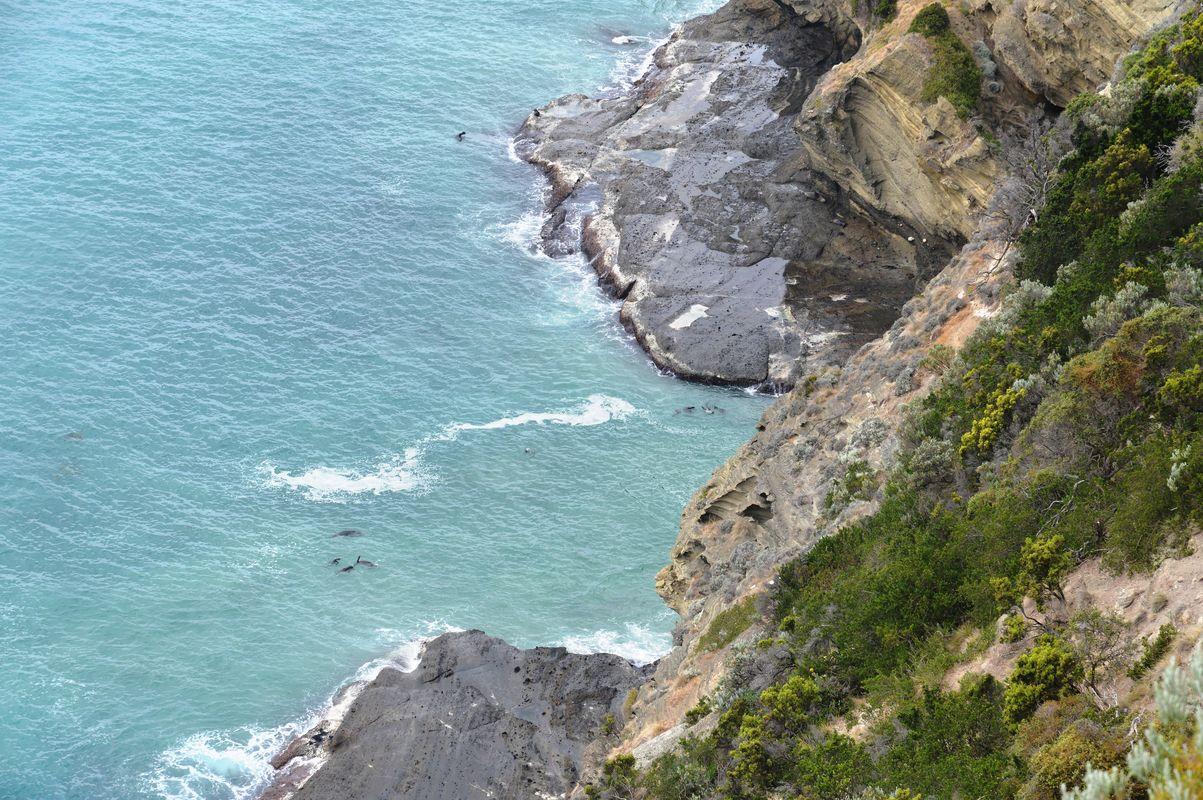 Cape Bridgwater phoques