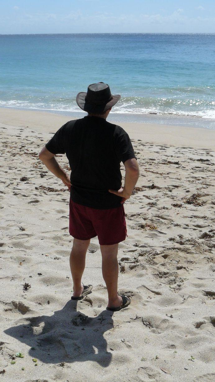 Mimosa face à la plage