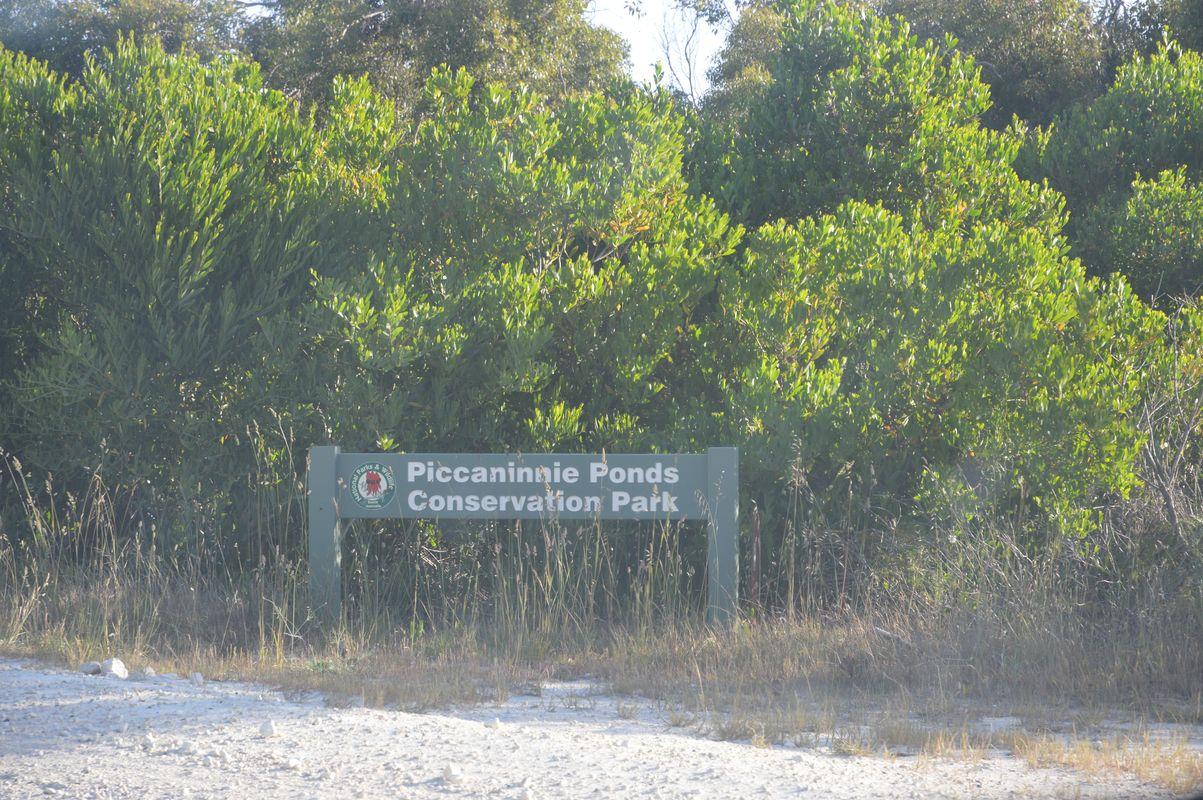 Piccanimmie Park