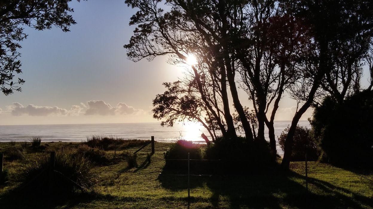 mimosa vue du camp